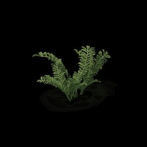 Silverweed.G01.2k