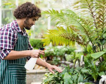Spraying Hydrogen Peroxide on Plants