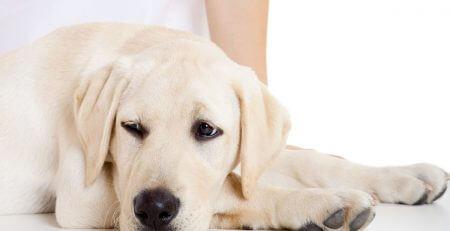 Use Hydrogen Peroxide On Dogs